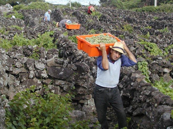 Pico Island Azores San Diego Reader