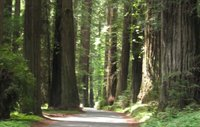 Tour the California Redwoods