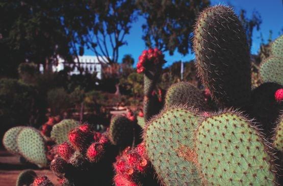 Balboa Park's desert gardens