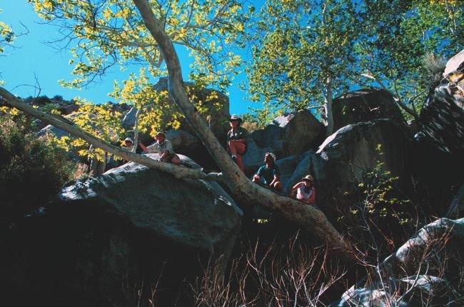 Sycamores and boulders, Sheep Canyon