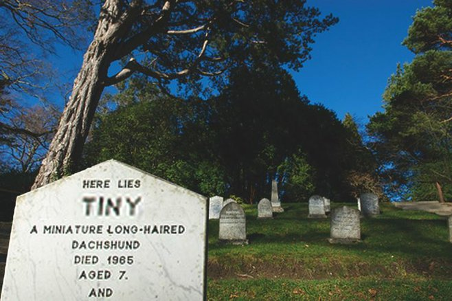 The cemetery's a good place to set your dachshund free.