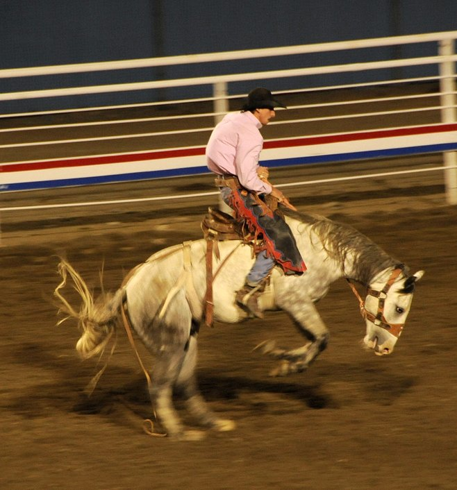Bucking bronco at Cody Nite Rodeo