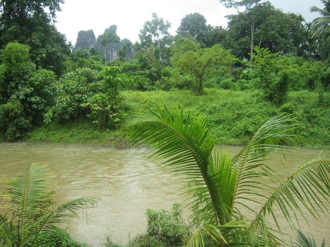 River in lush Khao Sok rainforest