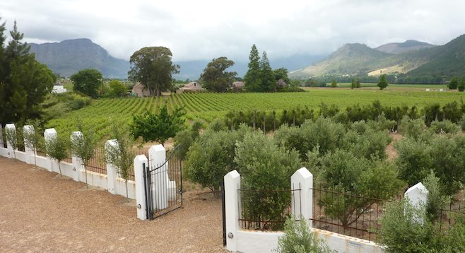 Vineyards in South Africa's beautiful Franschhoek Valley