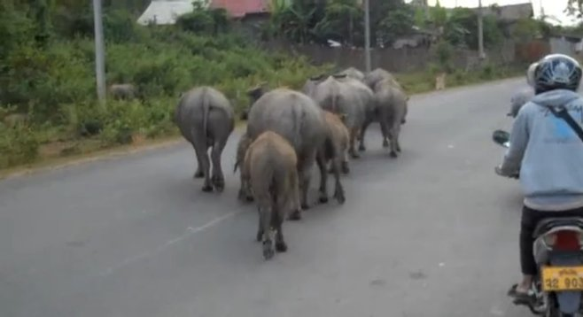 Your standard street traffic in Laos
