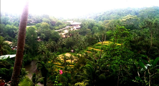 Mist settling on the rice-terraced hills in Bali.