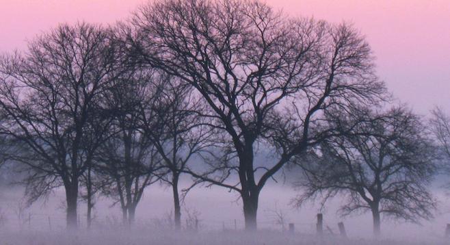 Dawn, northeast Texas.