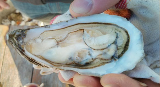 The feds aim to close its Northern California counterpart, but the Carlsbad Aquafarm still produces fresh oysters.