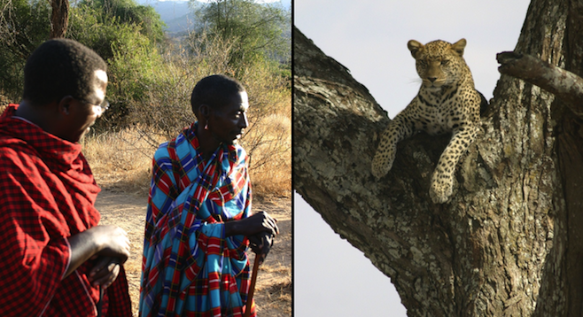 Moses and a tracker (left); the leopard that kept close tabs on the author for a week (right).