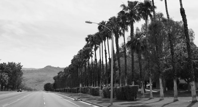 Palm-lined drive – a frequent sight in the Palm Springs area. [courtesy of Paul Burlingame Photo]