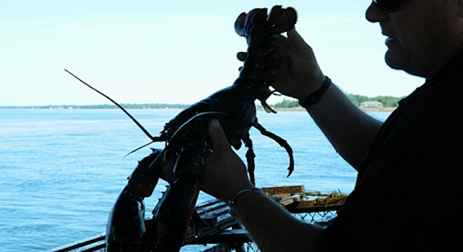 "Experience lobster fishing on PEI, recently ranked by Zagat as the second-best ""foodie getaway"" in the world."