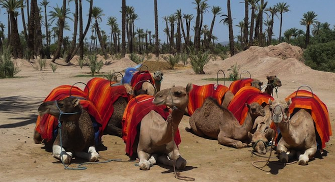 Who wants a ride? In Marrakesh, your transportation options vary.