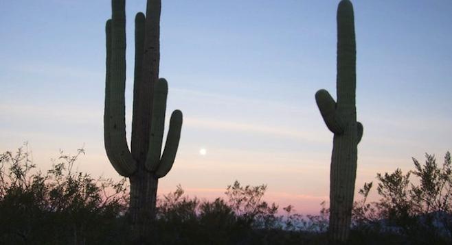 Saguaro National Park at dawn.