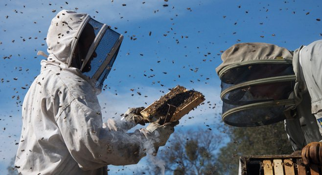 """""""More than Honey is the hive-collapse documentary that everyone is buzzing about!""""  — Hack Quotewhore, film critic"""