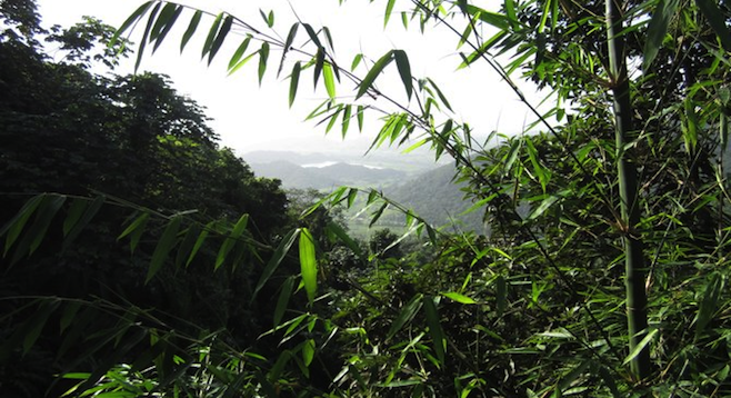 Vista from El Yunque National Forest, the only tropical rainforest in the U.S. National Forest System.