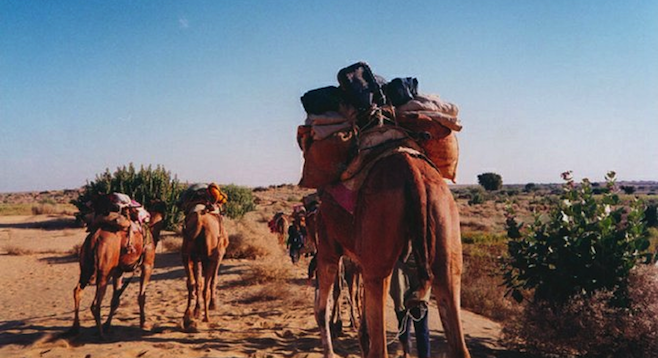 One must-do in Rajasthan: camel ride in the Thar Desert.