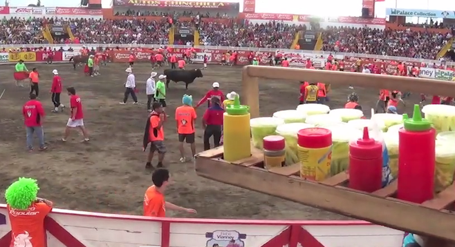 Tico–style bullfighting encourages audience participation.