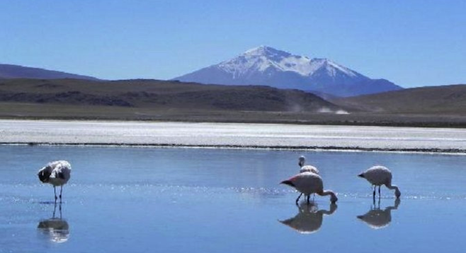 Flamingoes are everywhere in Bolivia's otherworldly Salar de Uyuni.