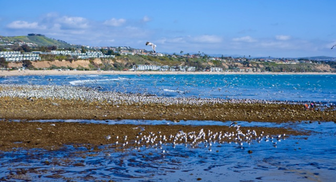 A very low tide at Doheny State Beach. (Stock photo)