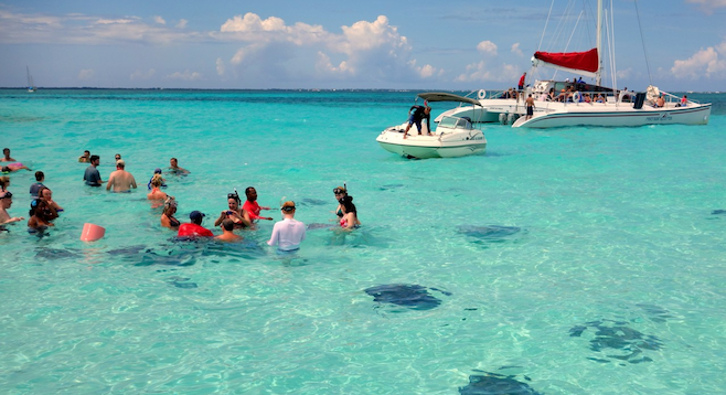 Snorkelers observe docile stingrays in the Caymans' Stingray City.