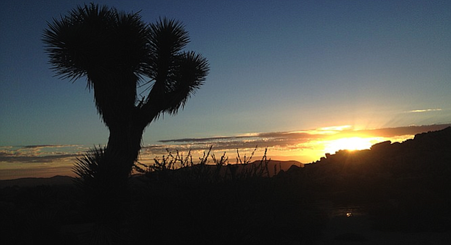 Room (or tent) with a view: sunrise over Joshua Tree National Park.
