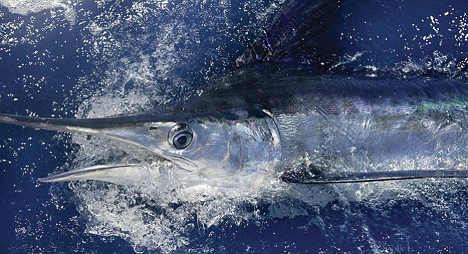 This time, the marlin decided the terms of release.