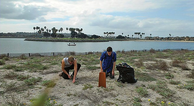 Prep the nesting grounds for California least terns before they come to town.