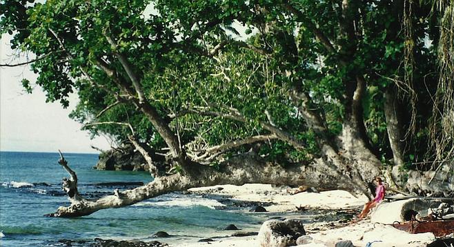 Banyan grove hides a pristine Tawi-Tawi beach.
