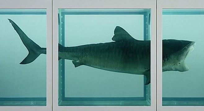 a shark in the mind of Fabricado en suiza, el reloj swatch mind the shark (sdk902) tiene relojería cuarzo, correa de plástico folio y caja de plástico descubre más originals scuba en.