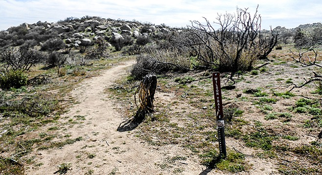 Wilson Trail begins near Old Culp Valley Road