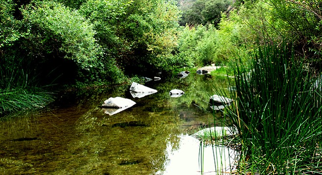 The river flows peacefully alongside the Santa Margarita River Trail