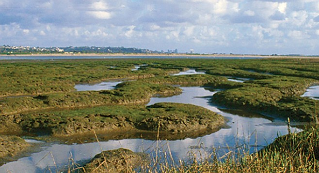 Kendall-Frost Mission Bay Marsh Reserve — 17' skiff run aground