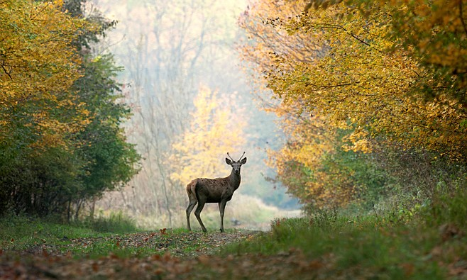 Deer were never among the ancients