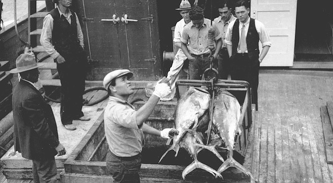 Unloading tuna at Westgate Cannery