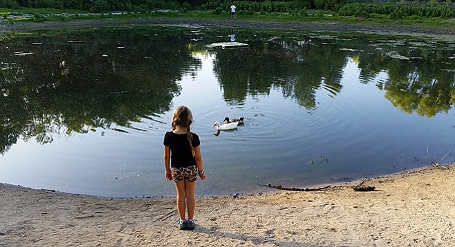 A small pond at Los Jilgueros attracts ducks and children.