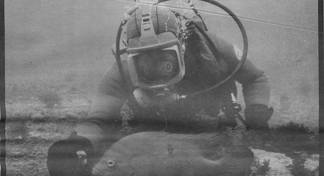 "Diver approaches garibaldi: ""I reached out for it and saw its thick orange lips purse in reaction, then blow. That mysterious bumping sound!"""