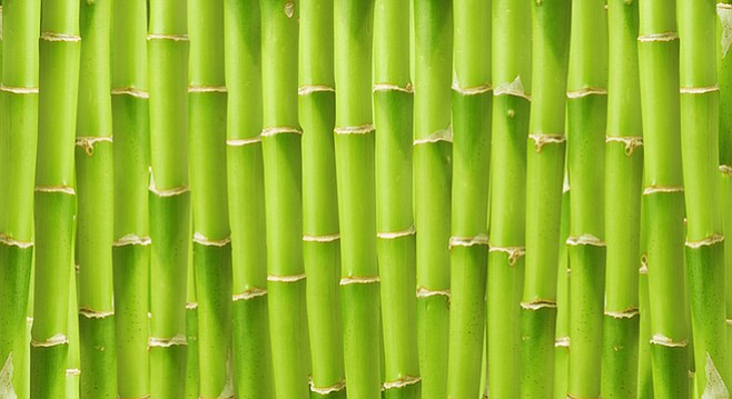 Most San Diegans believe that the stuff that grows along the San Diego River bed in Mission Valley is bamboo. But it's not. It's Spanish reed.