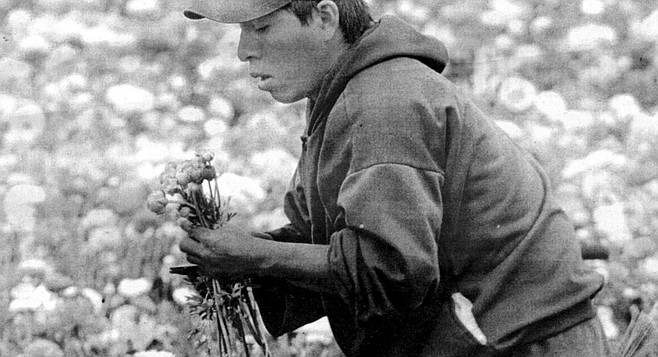 Edwin Frazee planted his first ranunculus seeds on these hills in the 1950s and was at one point the sole provider of ranunculus tubers to the international market.