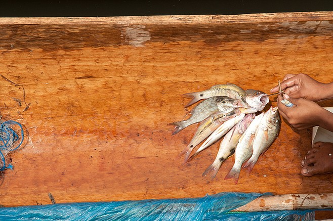 Fish caught in hand-carved, traditional canoe.