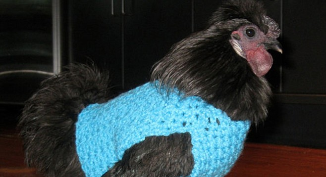 Is it a bigger waste of time to knit a sweater for a chicken or crochet socks for your cat?