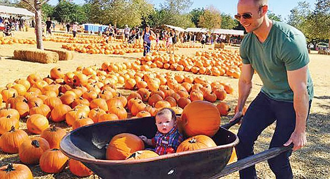 Pumpkins and farm animals at Bates Nut Farm
