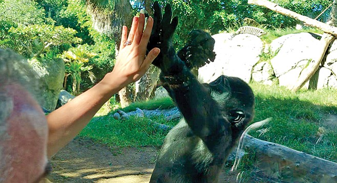Denny, 3-year-old son of Paul Donn and Jessica, hi-fives a regular visitor