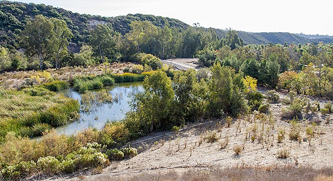 "Though state officials have dubbed this pond on private property in Carmel Valley ""high quality wetlands,"" the Coastal Commission ordered it drained, but insisted the property owner create more wetlands."