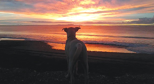 Sunrise and the dogs know they'll soon get to romp on the beach while I fish.
