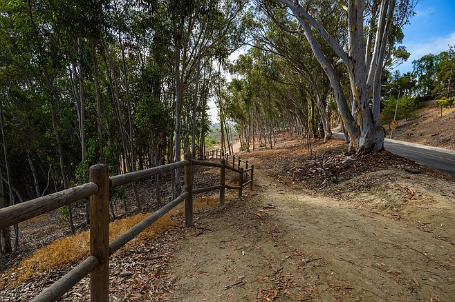 Village H North Trail passes through a eucalyptus forest