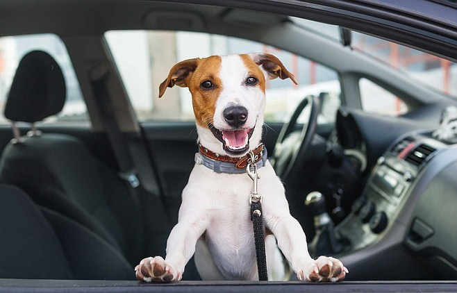 Appointment For Your Dog I Give Pet Rides San Diego Reader