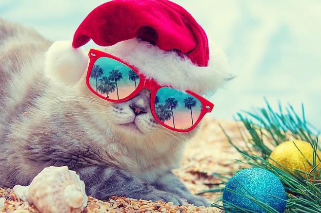 Meow-ry Christmas!