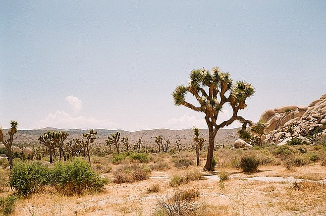 A view off the main highway in Joshua Tree, just a 2.5-hour drive northeast of San Diego.