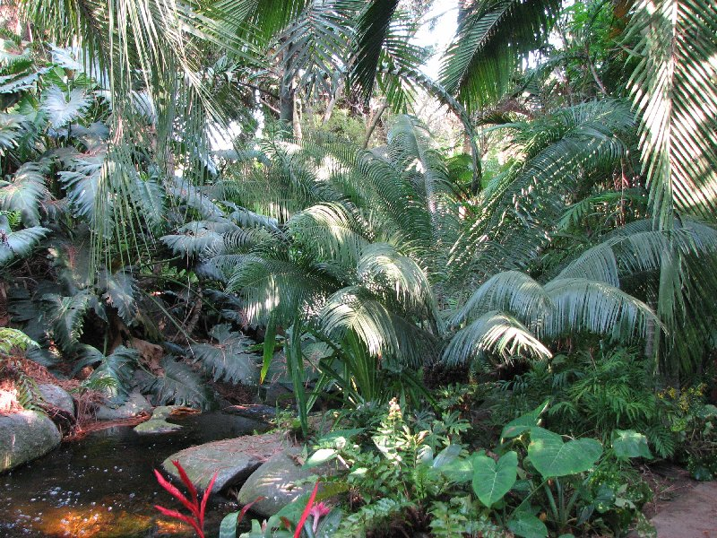 Palm cycad show sale saturday may 27 2017 9 a m for Sd garden designs