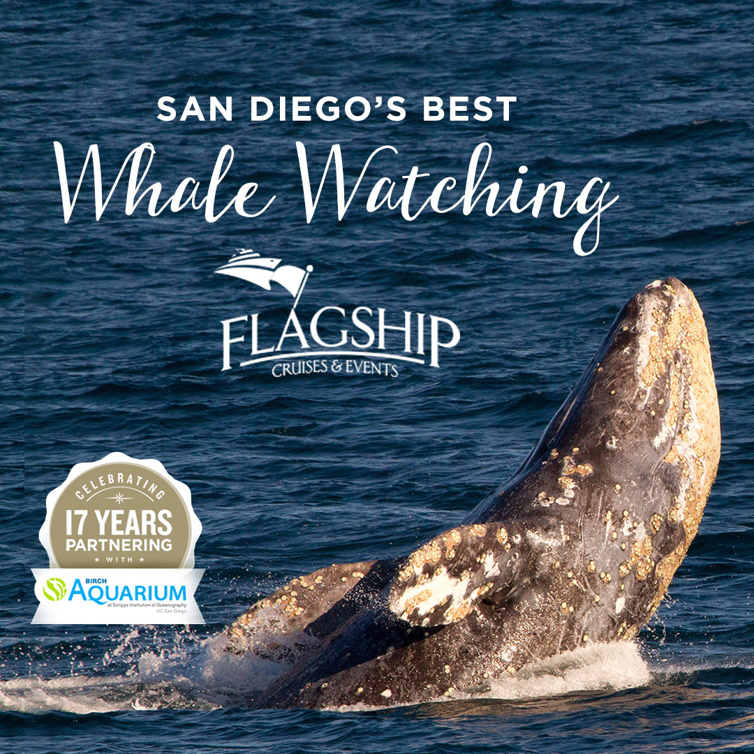 Whale Watching San Diego Reader